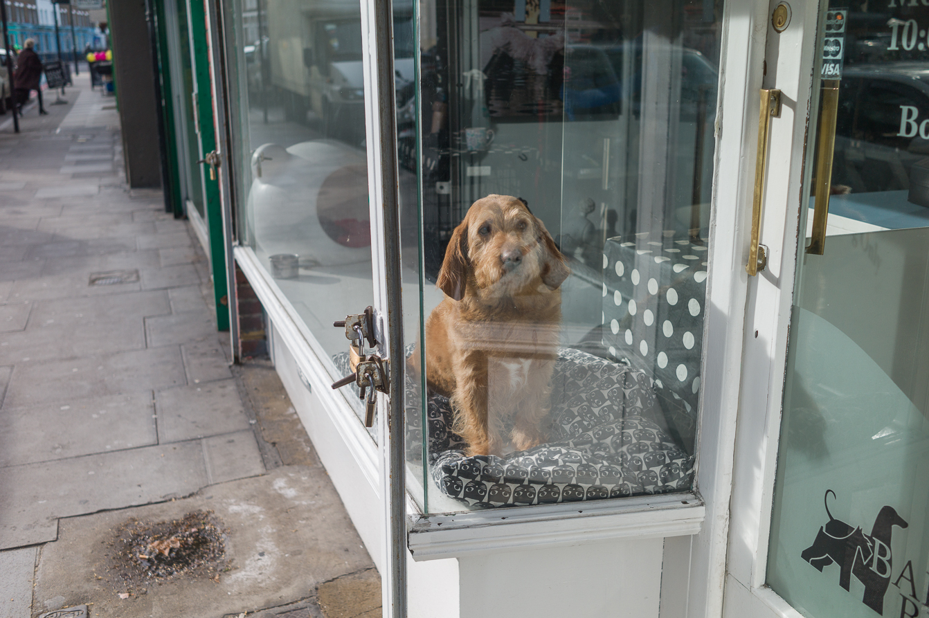How much is that doggy in the window ?