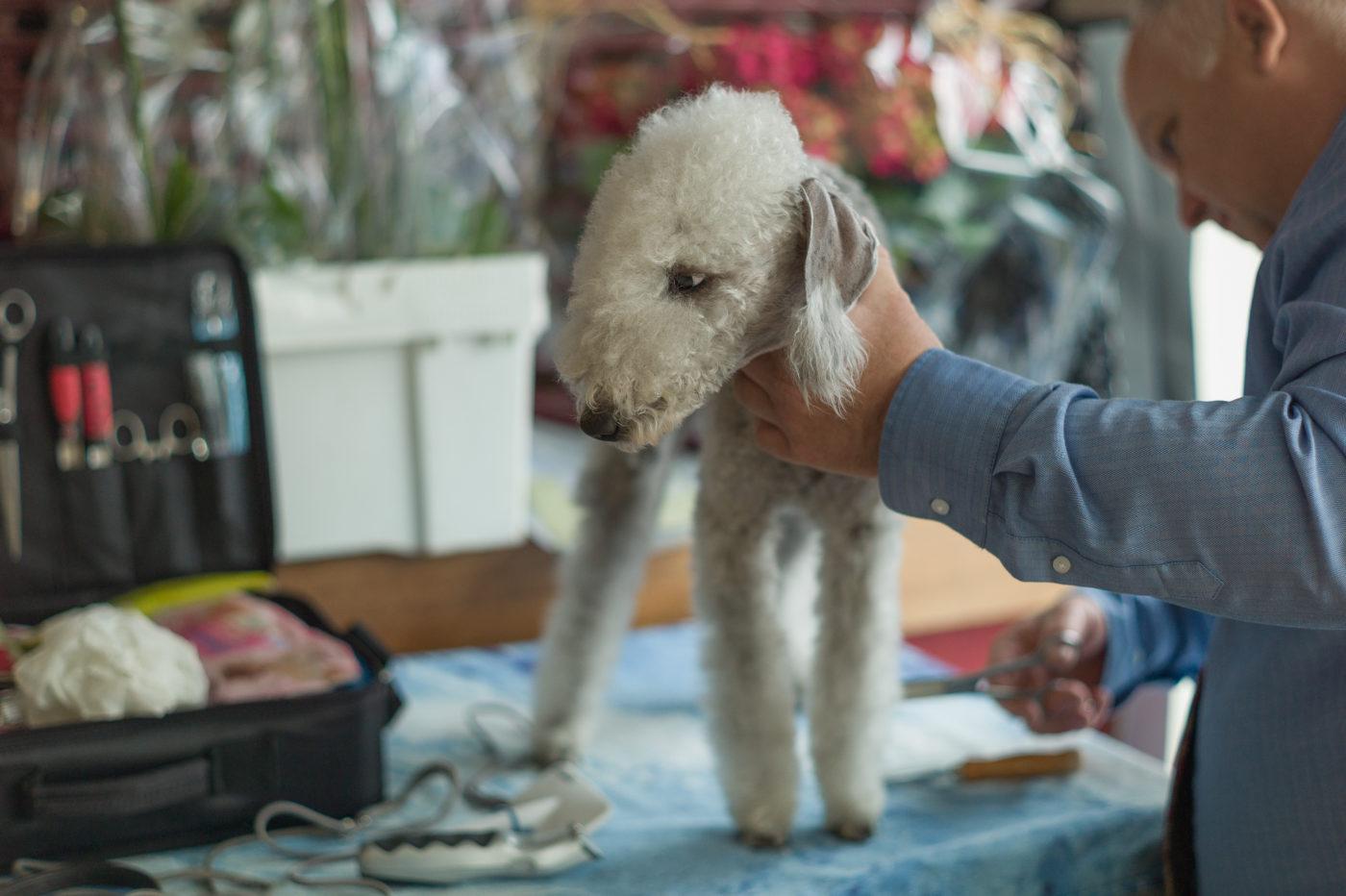 The Bedlington Terrier Association